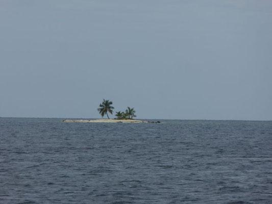 einsame Palme auf Insel