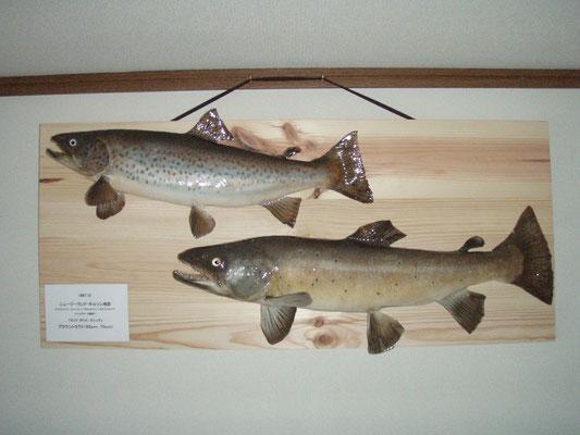 魚類美術剥製