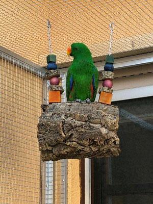 """Edelpapagei auf einer Korkröhre mit gefärbtem Knabberholz aus unserem Programm """"Schredderspielzeug""""."""