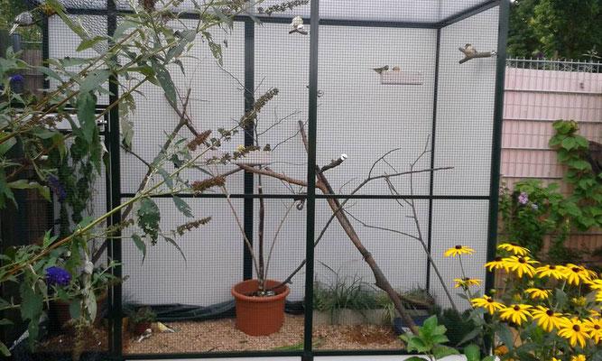 Freivoliere für kleine Vögel in Bonn. Hier wurde als Sicht- und Witterungsschutz die Rückwand und die Seiten mit einer Trespaplatte eingelassen im Sonderprofil erstellt. Das Dach besteht aus einer 16mm Doppelstegplatte in Opal.