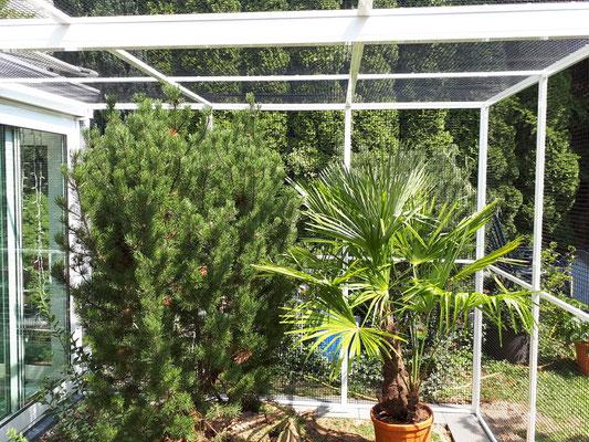 Pflanzen für die künftigen Bewohner haben wir integriert (Voliere für Ricos Futterkiste GmbH)