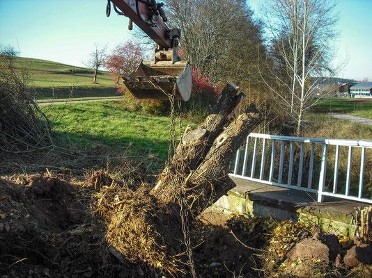 Große Baumwurzel wird ausgegraben