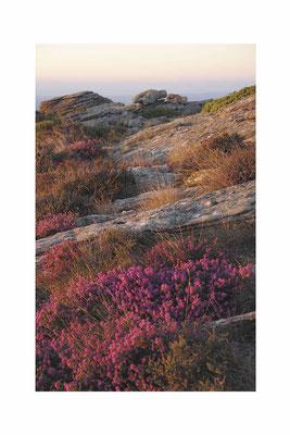 Le plateau, Cap Diol