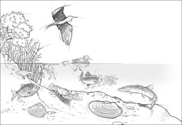 Skizze_Wassertiere