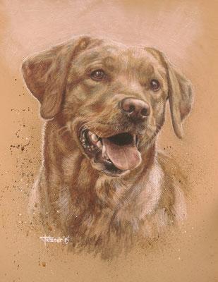 Hundeportrait - Labrador 'Luna'