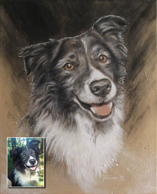 Hundeportrait - Border Collie 'Cayenne'