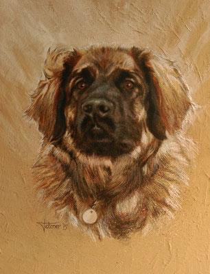 Hundeportrait - Leonberger