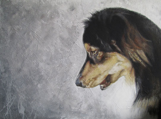 Hundeportrait - Australian Shepherd 'Ahmik'