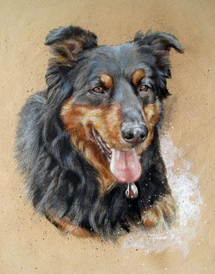 Hundeportrait - Berner Sennenhund 'Bonja'