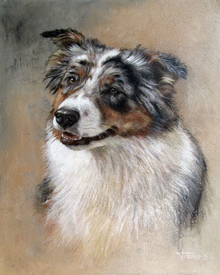 Hundeportrait - Ambra Blue - Australian Shepherd