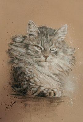 Katzenportrait - Moppel