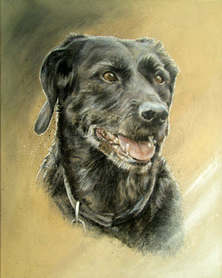 Hundeportrait - Schwarzer Labrador - https://youtu.be/0JaGg7uGRcc