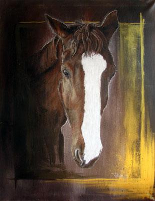 Pferdeportrait 'Calina'