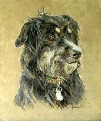 Hundeportrait - Schlomo