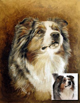 Hundeportrait - Australian Shepherd 'Faye'