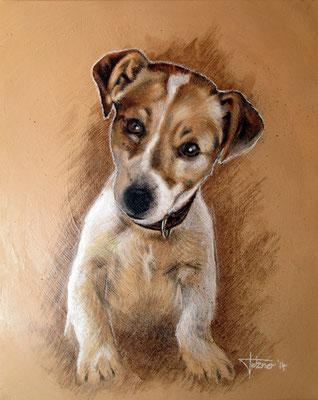 Hundeportrait Jack Russel Terrier
