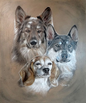 Hundeportrait - Three Dogs