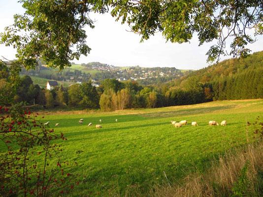 Schafe vor Eibenberg