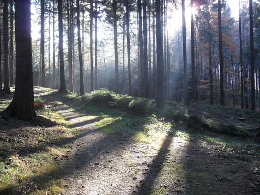Waldweg im Spätherbst