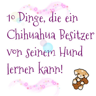 Chi-Love.de | BLOG | Magazin | 10 Dinge ... | by Swiffer Chihuahua