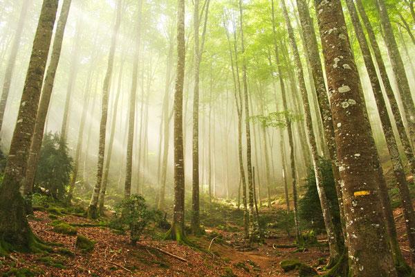 Forêt de Trescrouts Saint-Pé-de-Bigorre