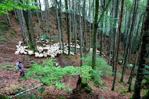 Descente de la cabane de l'Aoulhet vers le village