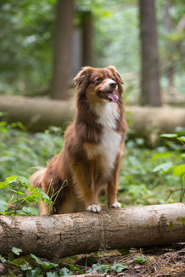 Tierfotografie, Hundeportrait, Hund, Outdoor