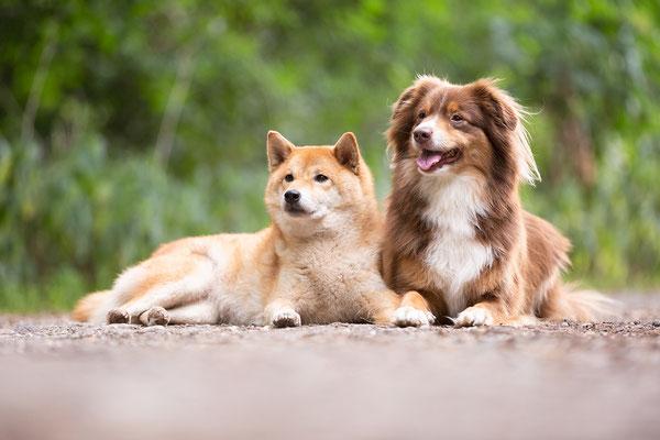 Tierfotografie, Hundeportrait, Hunde, Outdoor