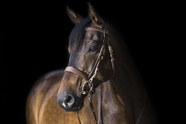 Tierfotografie, Pferdeportrait, Pferd, Outdoor