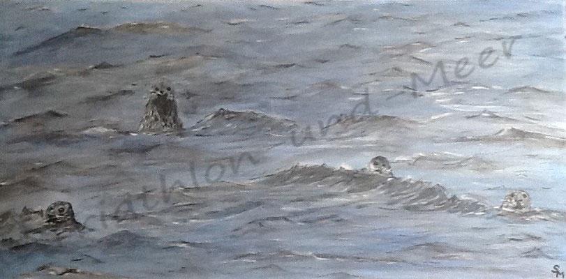 Robben in der Nordsee 7/15