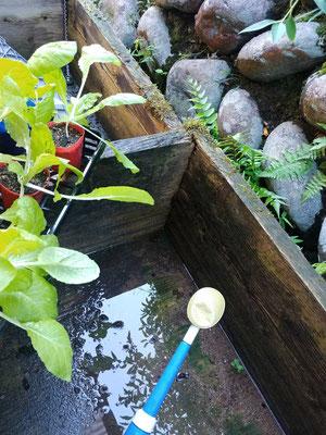 山水を貯めて野菜等を洗う木の水槽