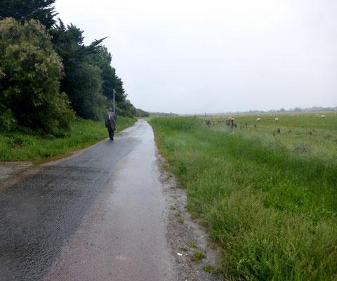 Petite route qui suit les salines la D306E