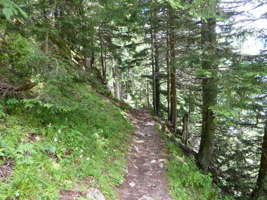 En forêt pour finir