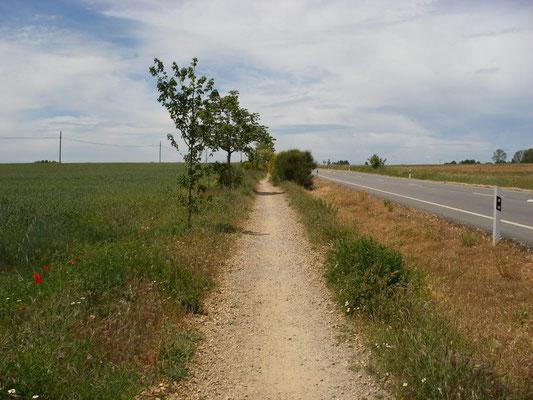 Le camino au bord de la N 120