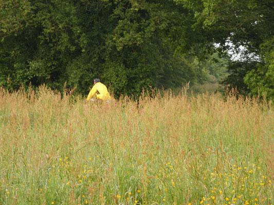 Un pélerin perdu dans les herbeux.
