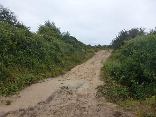 Terrain sableux