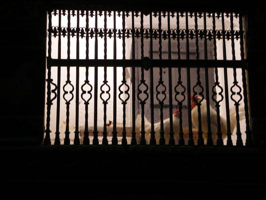 Les coqs  dans la cathédrale , Domingo de la Calzada