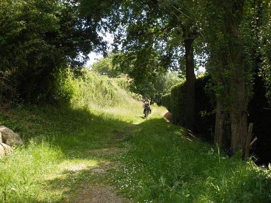 Des chemins herbeux
