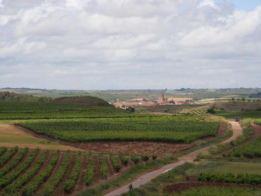 Les vignes sont importantes en Espagne