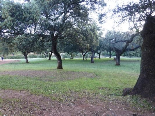 Des chênes à perte de vue