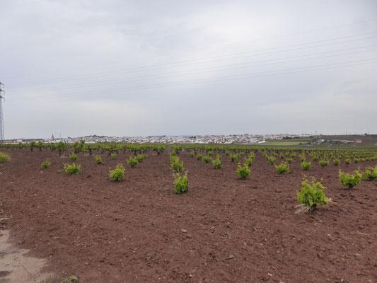 Au loin la cité de Villafranca de Los Barros