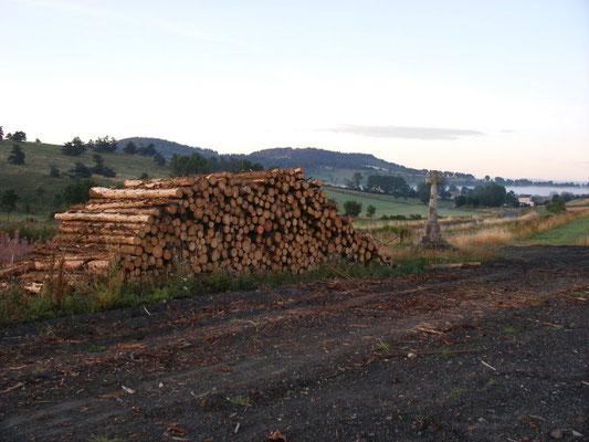 Une activité forestière
