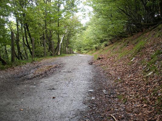 La forêt avant d'arriver à Roncevaux