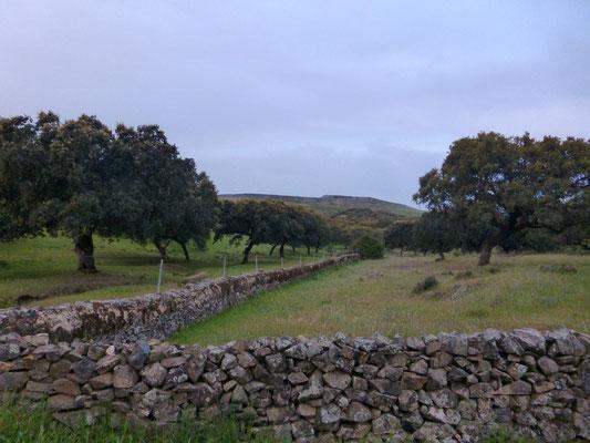 Les champs sont entourés de murs en pierre sèches