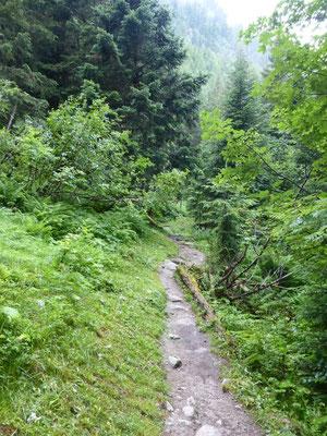 Nous prenons un sentier en forêt