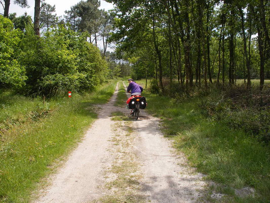 Nous prenons la forêt de la Gironde