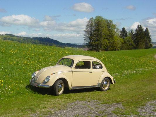 Hubert Müller, VW 1200 Ovali, Baujahr 1954