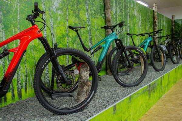 Unsere Experten in Nürnberg beraten Sie gern beim Kauf Ihres e-Mountainbikes