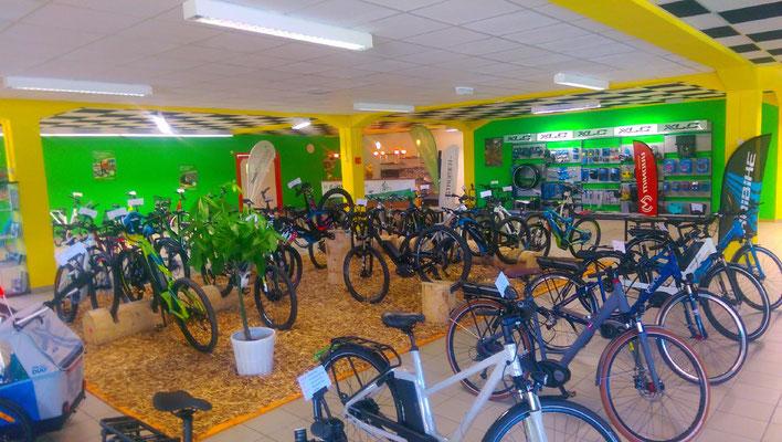 Entdecken eine große Auswahl an e-Bike Typen und testen Sie, welches Pedelec am besten zu Ihnen passt