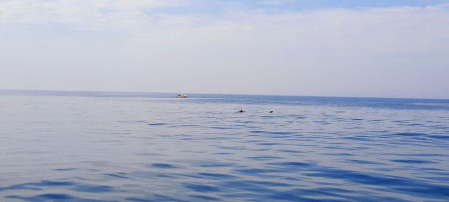 Delphinbesuch auf der Fahrt nach Cascais